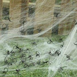 Pacchetto di 50 ragni